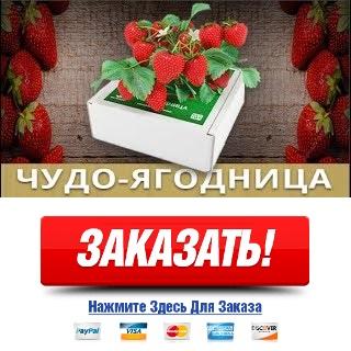 Как заказать Вырастить клубнику из семян на подоконнике