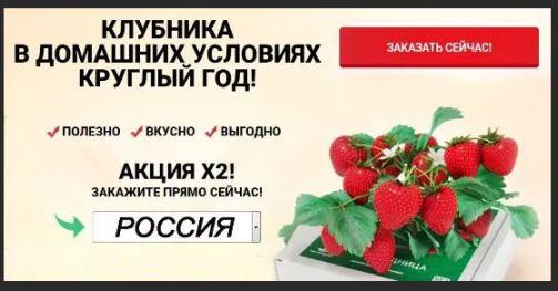 Домашняя ягодица клубника