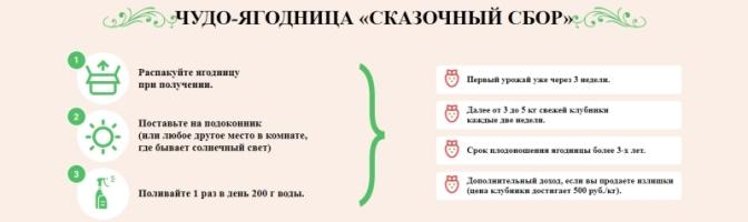 Как заказать Клубника Сказочный Сбор купить в АнжероСудженске