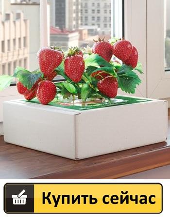 Вырастить клубнику из семян на подоконнике